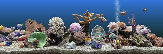 Pecera virtual Marine Aquarium 3